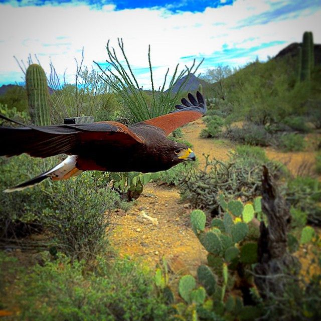 856 best beautiful tucson az images on pinterest tucson free yourself and let your soul take flight in tucson arizona photo of solutioingenieria Gallery