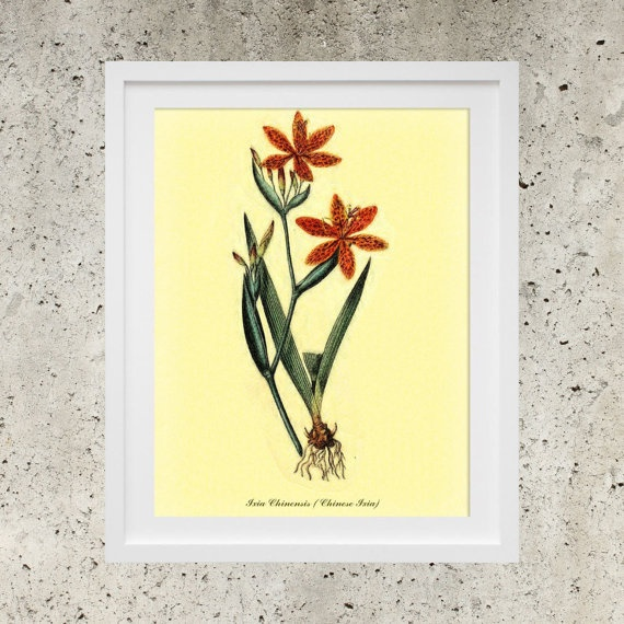 Vintage Botanic Garden Red Flowers  SALE Wall Art by DigitalBanana Chinese Ixia
