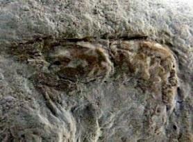 Pesquisadores brasileiros descobrem no Ceará fóssil de mais de 100 milhões de anos