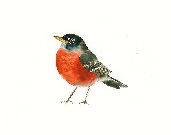 I want this watercolor robin tattooed on me to remind me of Purrty.