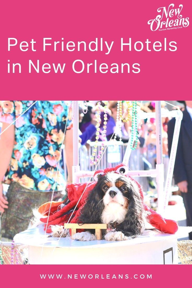 Pet Friendly Hotels In New Orleans New Orleans Hotels Pet Friendly Hotels Pet Friendly