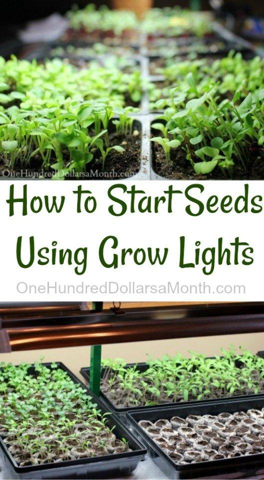 How To Start Seeds Using Grow Lights Gardening Growing 400 x 300