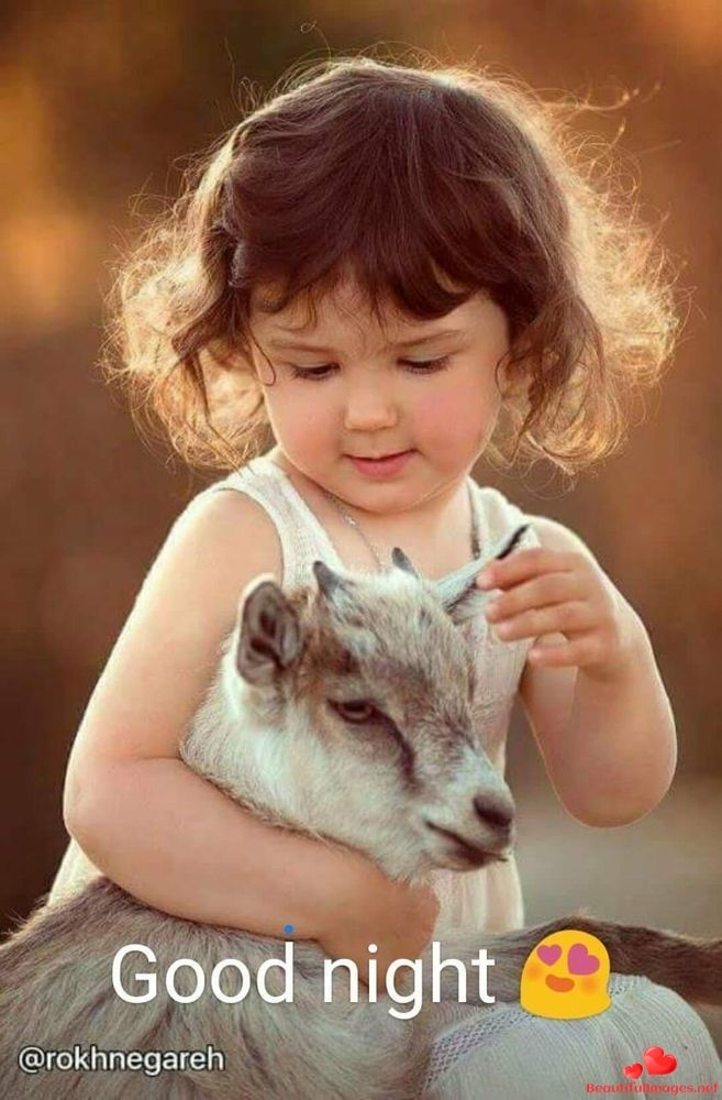 Cute Baby Good Night Images Free Download : night, images, download, Download, Pictures, Images, Photos, Facebook, Whatsapp, Night., Quotes,, Sayings, Blessings…, Animals, Kids,, Goats,, Animal, Photography
