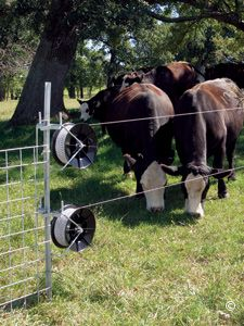Electric Fencing for Cattle - Premier1Supplies
