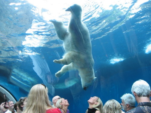Close encounters of the awesome kind at the Pittsburgh Zoo & PPG Aquarium.