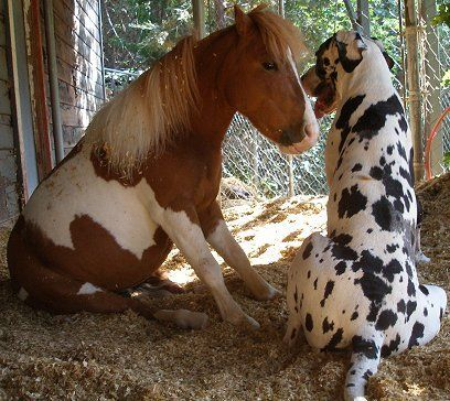 Best friends - big dog, little horse!
