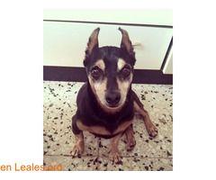 Hugo the boss  #Adopción #adopta #adoptanocompres #adoptar #LealesOrg  Contacto y info: Pulsar la foto o: https://leales.org/animales-en-adopcion/perros-en-adopcion/hugo-the-boss_i2819 ℹ  Sociable con perros y gatos. Le encantan los mimos y la comida. Fue entregado en el albergue de bañaderos por su antigua familia. Ahora esta felizmente en una casita de acogida esperando a su familia ideal.    Acerca de esta publicación:   Esta publicación NO ha sido creada por Leales.org y NO somos…