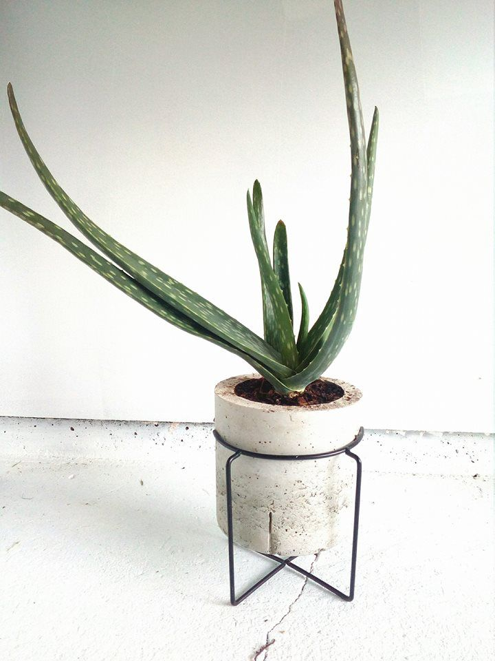 flower potts aloe vera concrete cement pots