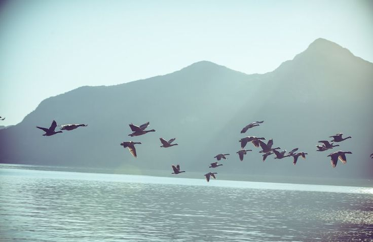 Vancouver Lifestyle by Patrick Curtet #Vancouver #Canada #Lifestyle #Photography #patrickcurte