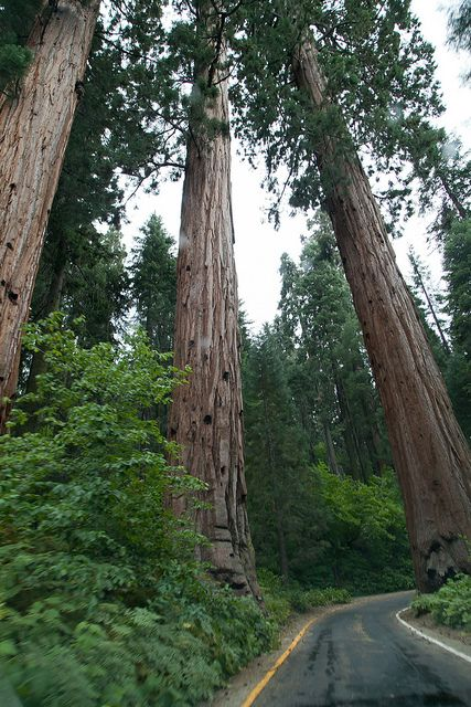 giant sequoia national monument | Sequoia National Park_California | Flickr - Photo Sharing!