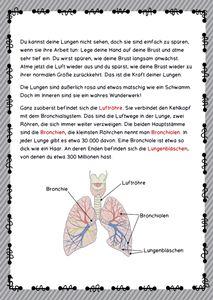 Unser Körper und seine Funktionen  Blutkreislauf