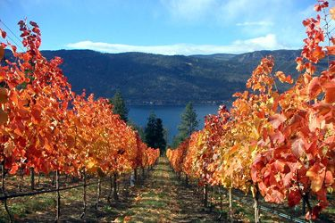 View from Arrowleaf Cellars, who will be featured at the Art of Wine Festival. http://www.arrowleafcellars.com/