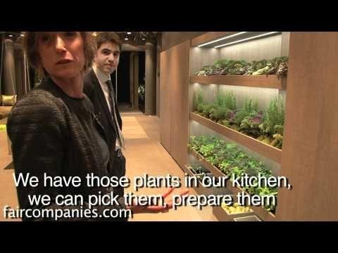 A Mediterranean kitchen: indoor garden with drip system