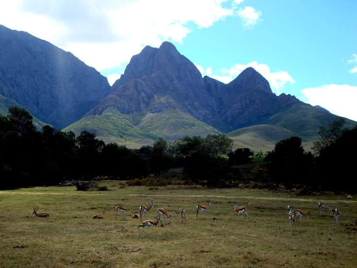 #southafrica #mountain #beauty #landscape #nature