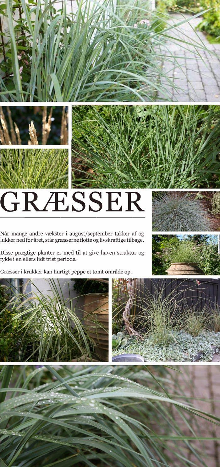 Havedrømme: Prægtige græsser