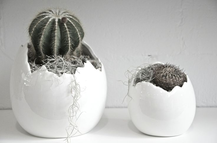 Those who are tired of continually replacing seasonal blooms around the house, should opt for the unique, long-lasting shapes of succulents and cacti. Quiet in palette and easy to look after, succulents and cacti will add interest to any table top or corner space without demanding too much of your time. #theshelternz #conceptstores #newzealand #design #theshelter