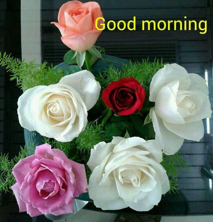 Good Morning ~