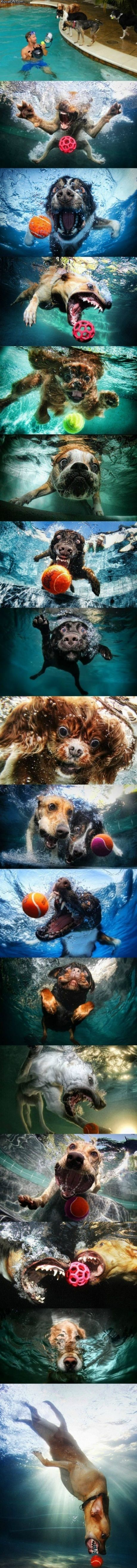 Dog pics with an underwater camera: Dogs Pics, Funny Dogs, Funny Pictures, Dogs Photography, Underwater Dogs, Dogs Pictures, So Funny, Pools, Dogs Faces