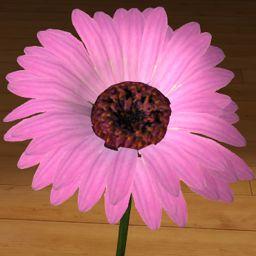 Gerbera różowa 3D