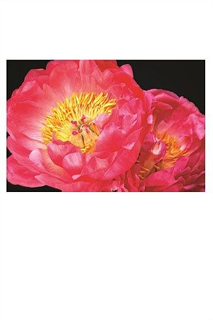 Roses, Peonies, Poppies and Camellias, and Magnolias are Anna's inspiration for this modern romantic range of floral canvases. Her short editions guarantee uniqueness.   Peonies are voluptous in form and delicate in tone, this beautiful Peony print will add a romantic ambience to your bedroom.