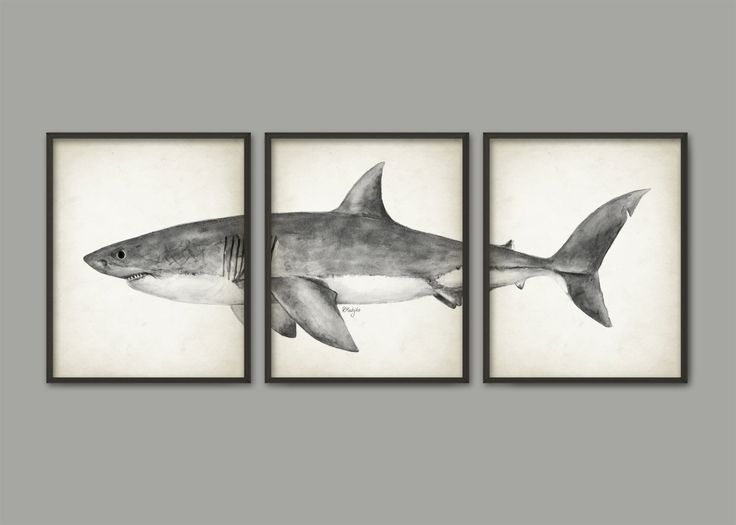 Great White Shark Watercolor Art Poster Set Of 3 - Shark Art Print - Great White Shark Poster - Bathroom Wall Art - Marine Biology (AB560) This set of 3 watercolor Great White Shark art prints has been created from an original watercolor painting made by me and it is printed using high quality archival inks on heavy-weight archival paper with a smooth matte finish. A fantastic gift or a fabulous addition to your home! The size indicates the size of each individual print in the set. So, for…