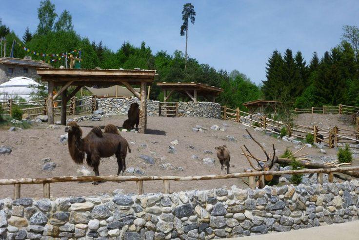 Mongolische Steppe, Zoo Zürich | vetschpartner Landschaftsarchitekten AG