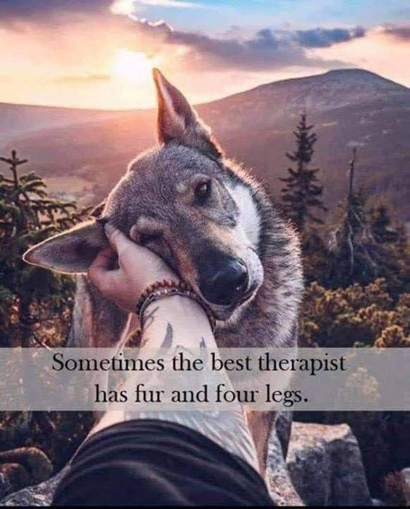 Affordable Inspirational Quotes Posters Here Are Some Uplifting Motivational And Inspirational Quotes Posters That Ca Dog Quotes Love Dog Quotes Four Legged