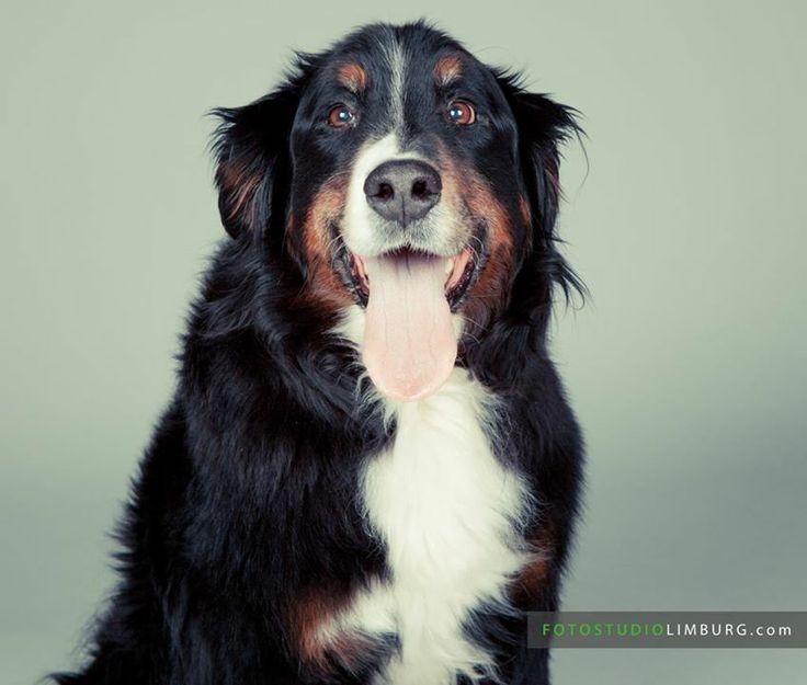 Even stil blijven zitten! :) FotoStudio Limburg – Fotograaf met studio in Sittard Geleen | Fotoshoot Huisdier, samen of alleen je hond of kat op de foto FotoStudioLimburg.com #fotoshoot #fotograaf #limburg #fotostudio