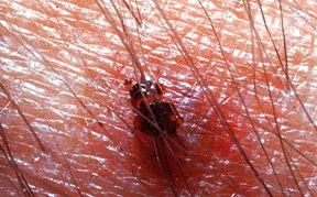 Ticks Commonly Encountered In California -   Larisa Vredevoe, Ph.D, Department of Entomology, University of California, Davis