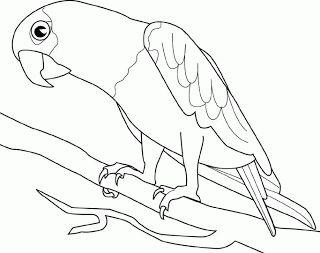 Kindergarten Worksheet Birds & Insects-III ~ Kindergarten