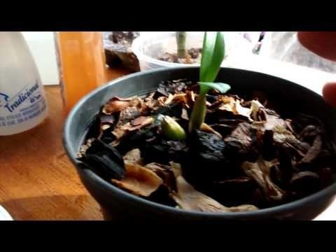 UTI de orquídeas com Teresinha Kunz - YouTube