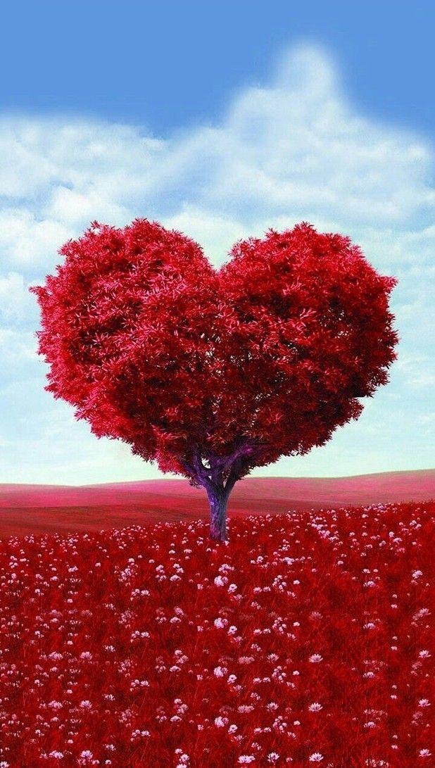 Love Wallpaper Image Apple Wallpaper