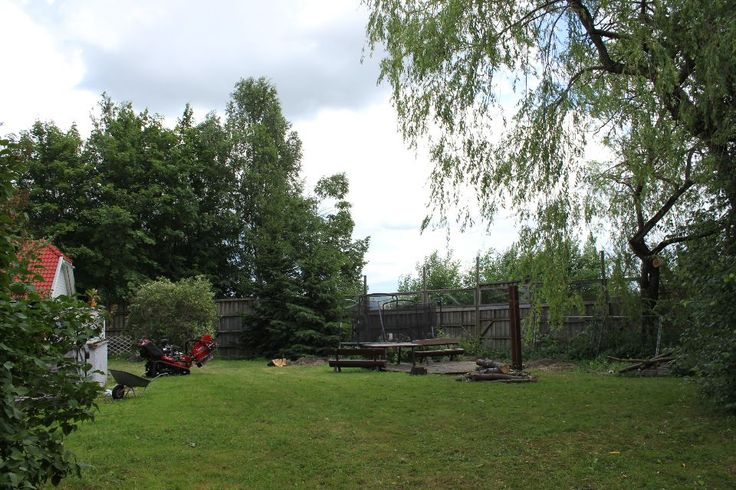 Trefelling utført i Lier 20-06-2014 - Angell Hageservice