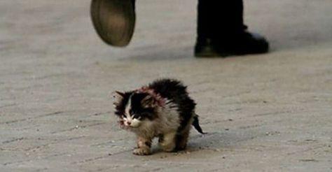 Niemand wollte diese Katze berühren. Als ein Mann es endlich tat, geschah etwas Wunderbares.   LikeMag   We Like You