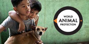 WAP - World Animal Protection  Het laatste nieuws over dierenwelzijn en dierenmishandeling