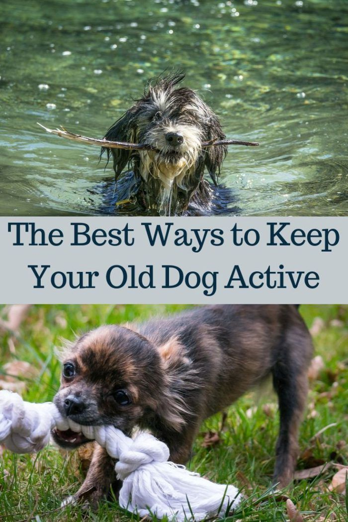 The Best Ways To Keep Your Old Dog Active Senior Dogs Care Senior Dog Old Dogs
