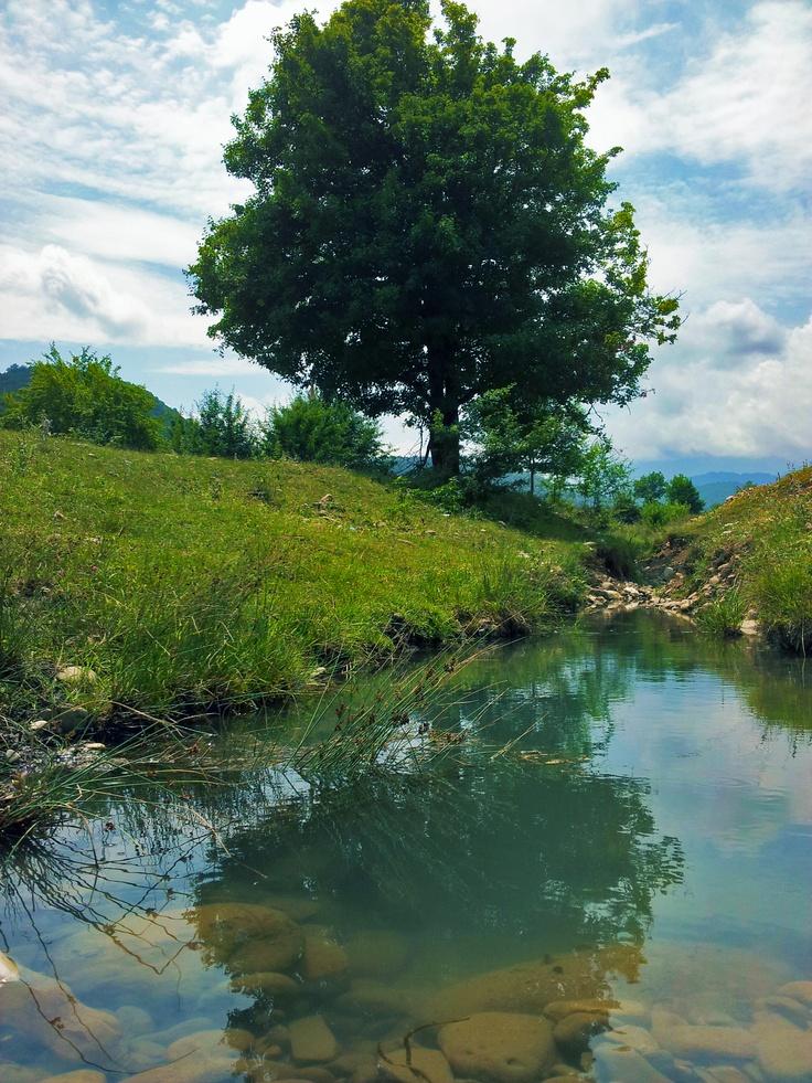 uzunmeshe long forest village quba azerbaijan forest
