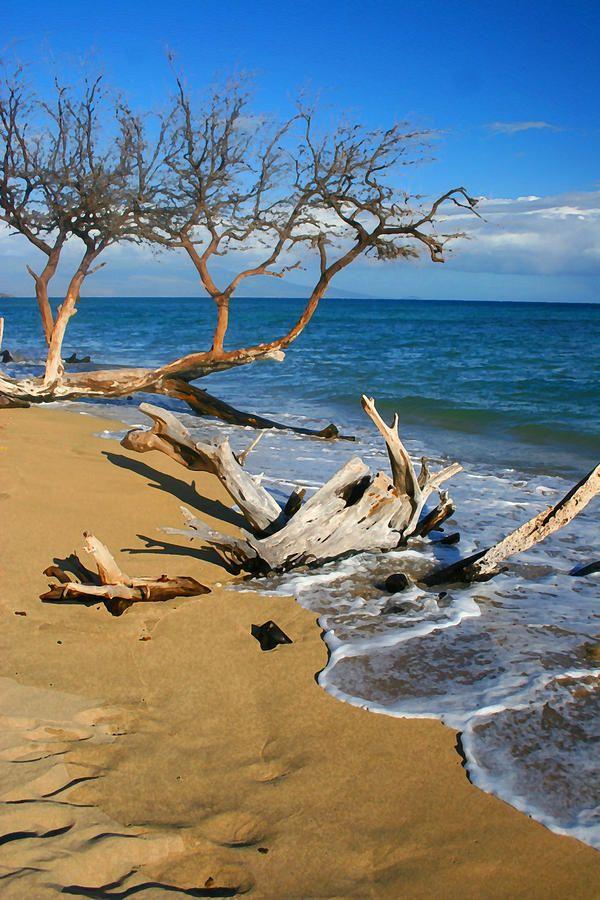 ✮ Maui Beach Dirftwood