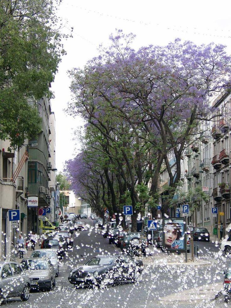 Jacarandás na rua Almirante Barroso