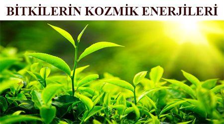 Tüm varlıklarda olduğu gibi bitkilerde de enerji vibrasyonlarıvardır. Bitkiler zahiri ve batını yönüyle insanlığın emrine verilmiştir.Bitkiler kozmik enerjilerini ve psişik güçlerini Allah'ın engüzel sıfatlarının tezahürü olarak esmalardan almaktadır.Örneğin:Adaçayı zahiri olarak, sinirlilik, asabiyet ve stres halini bertarafederken, batıni yönü itibariyle de, negatif enerjilerin arındırılmasınısağlayan Ya Şafi esmasının tecellisidir. Bazı bitkilerin psişik yönleri ve yaydıkları kozmik…