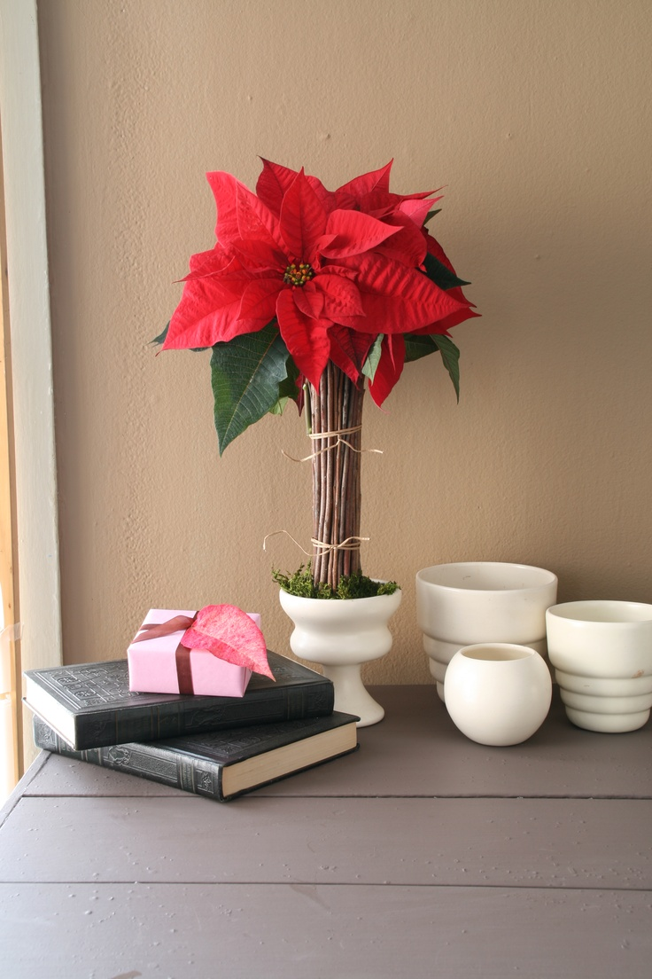 A beautiful way to display poinsettia blooms. www.holidaywithmatthewmead.com