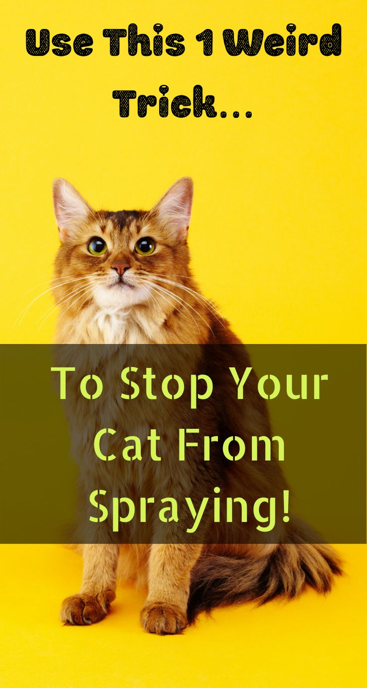 Cat Peeing Everywhere? How Do You Stop It Cat spray, Cat