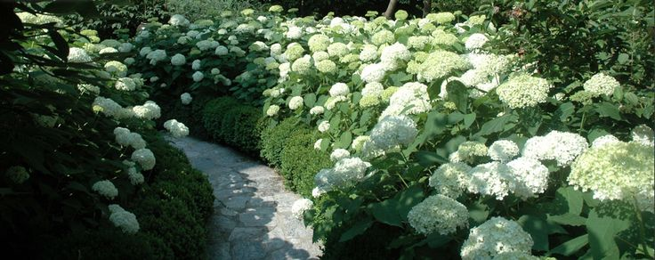 115 best images about garden on Pinterest Gardens