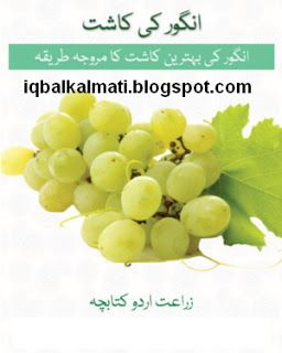 Grapes Crop Cultivation Methades In Pakistan Urdu PDF is available to read online and download http://iqbalkalmati.blogspot.com/2016/05/grapes-crop-cultivation-methades-in.html