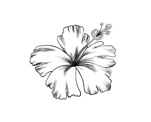 10 Notes Drawing Tattoo Habiscus Flower Illustration Black And White