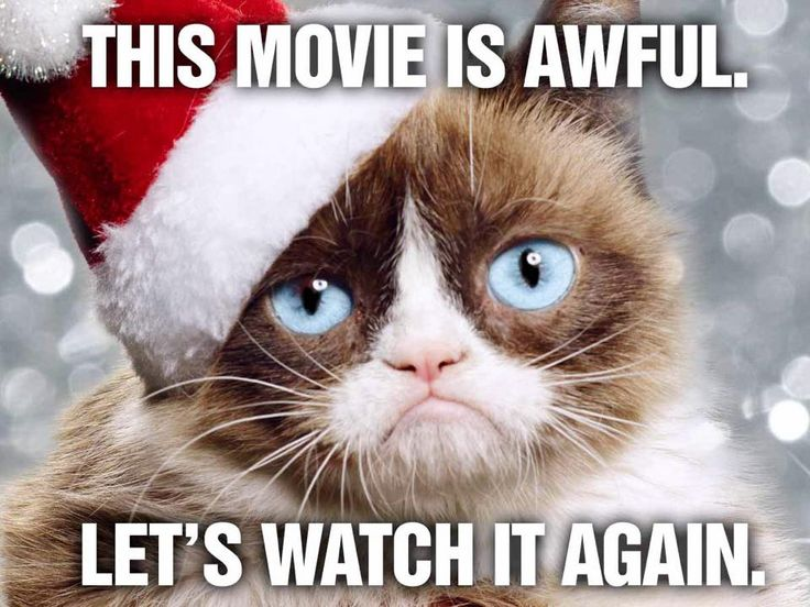 Funny Christmas Movie Meme : 274 best tard the grumpy cat images on pinterest grumpy cat