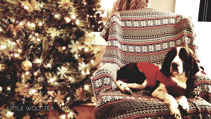 Holiday decorations and man's best friend. Warm and cozy by the #Christmas Tree #holidays #winter