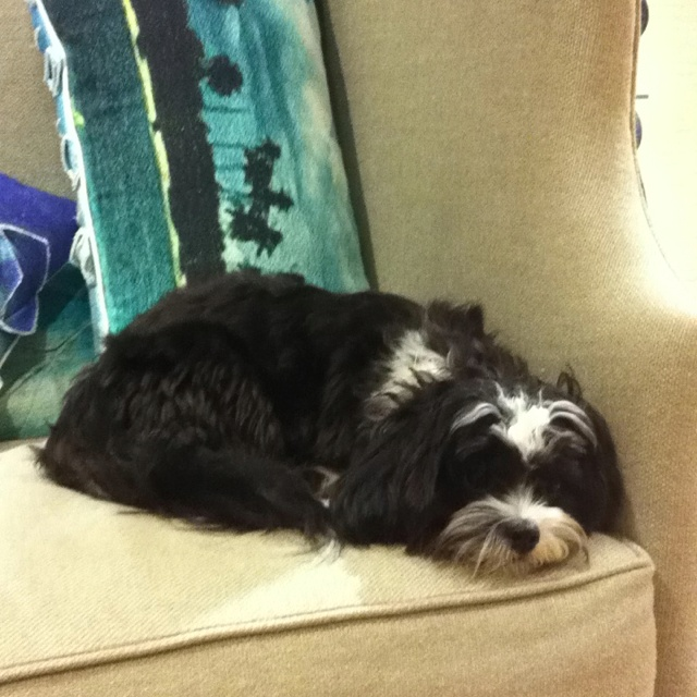 23 Best Dog Bone Neck Pillow Images On Pinterest Dog