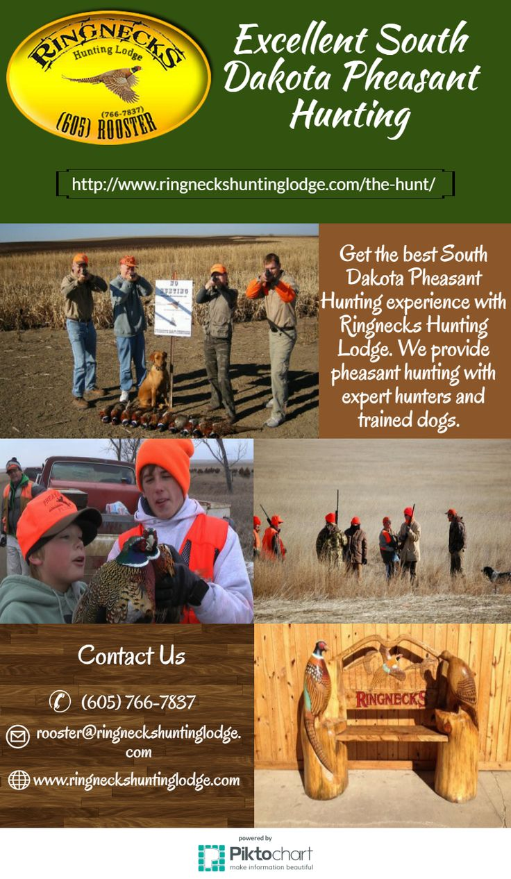 Get the best South Dakota Pheasant Hunting experience with Ringnecks Hunting Lodge. We provide pheasant hunting with expert hunters and trained dogs.