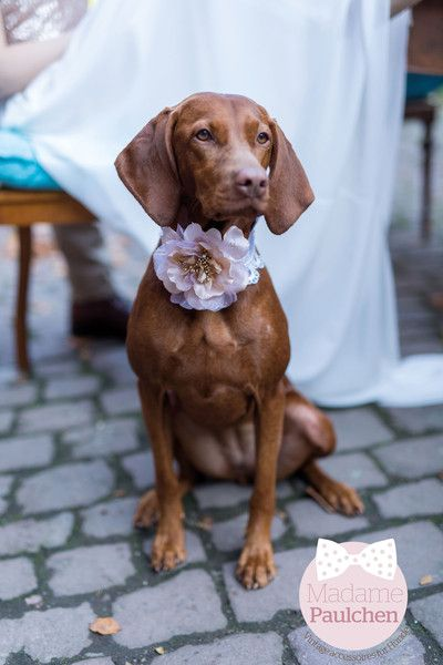 """Hund: Halsbänder - Vintage Hunde Halsband """"Madame Paulchen"""" Spitze - ein Designerstück von Papiergold bei DaWanda"""
